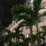 Palmy pod Rockefeller Center