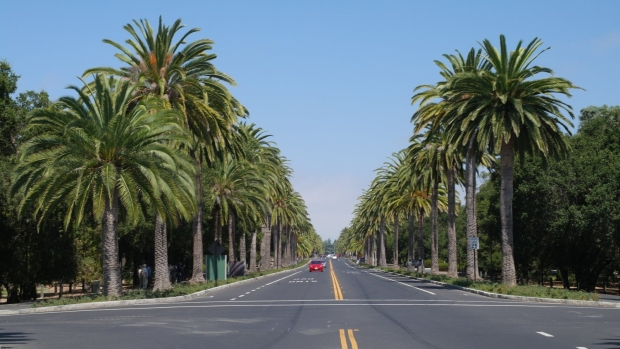 Droga dojazdowa do Stanford University