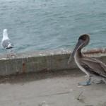 Jakieś dziwne ptaszysko :)