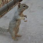 Å»ebrząca wiewiórka :)