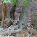 Wildlife :)