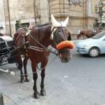 Palermo - doro?ka pod Quattro Canti